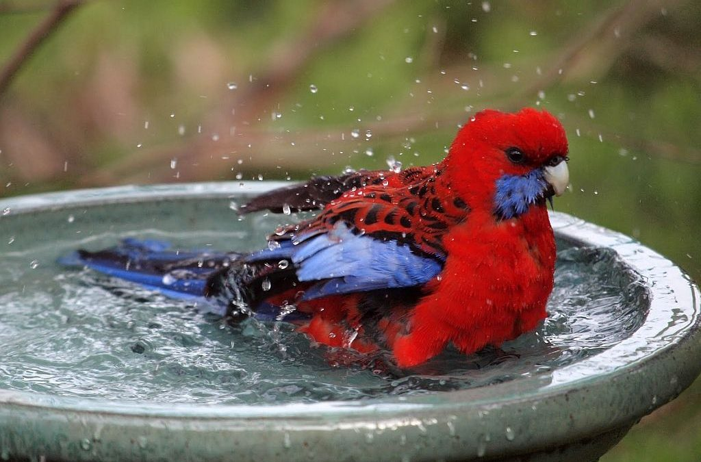 All About Bird Baths – Let your yard go to the birds