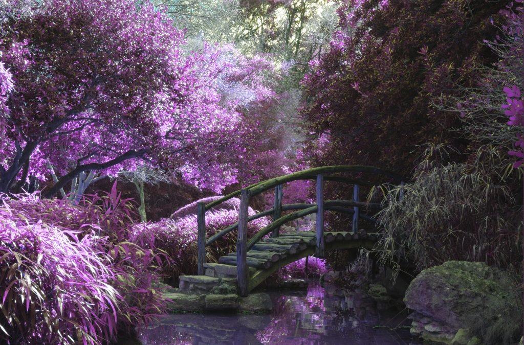 Garden Bridge – Beauty Among The Green