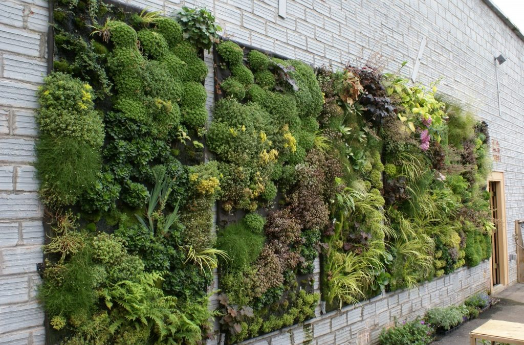 Grow A Beautiful Vertical Garden