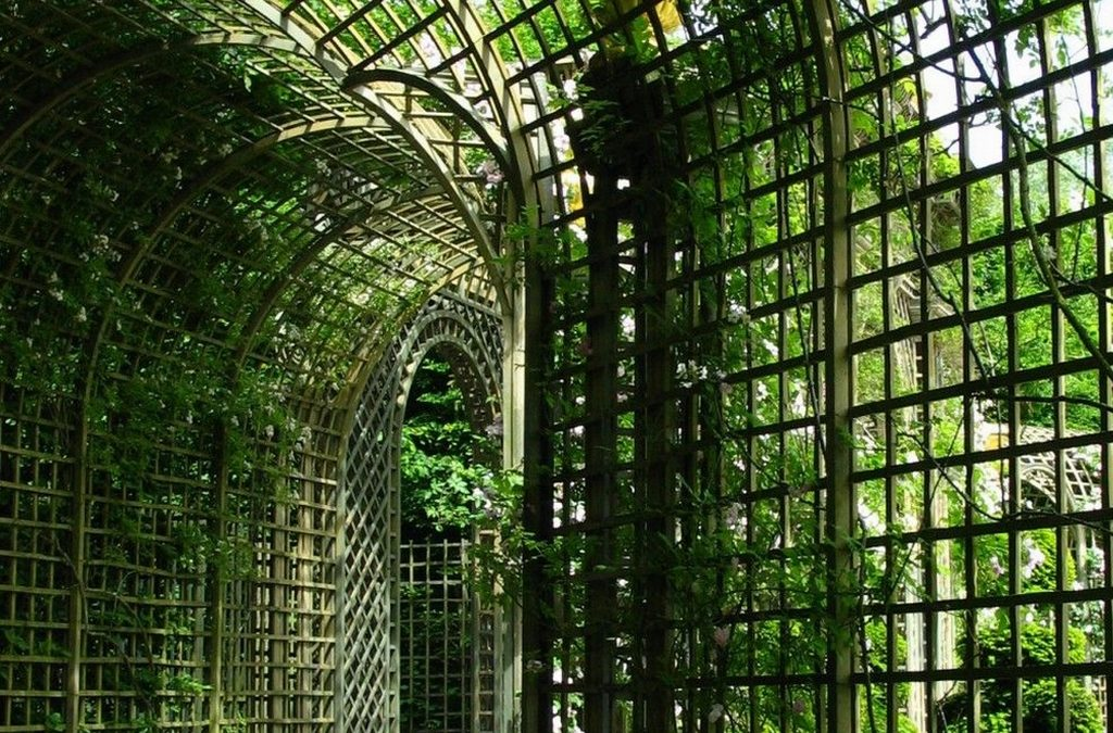 Arbor and Trellis – The Beauty of Climbing Vines